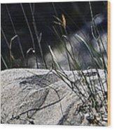 A Light Spring Breeze Wood Print by Gerlinde Keating - Galleria GK Keating Associates Inc