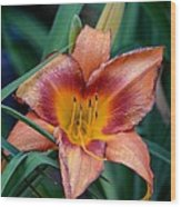 A Lily's Golden Heart Wood Print