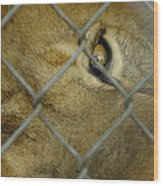 A Lions Eye Wood Print