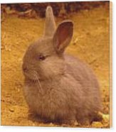 A Little Bunny Wood Print