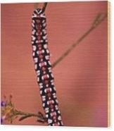 A Little Caterpillar Wood Print