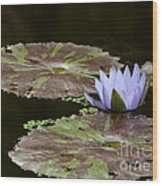 A Little Lavendar Water Lily Wood Print