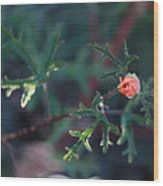 A Little Peach Flower Bud Wood Print