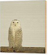 A Lone Artic Owl Wood Print