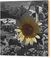 A Lone Sunflower In The Shade Wood Print