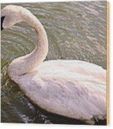 A Lone Swan Named Gracie Wood Print