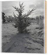 A Lonely Little Prairie Ceder Wood Print