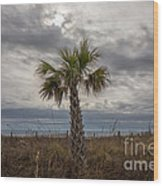 A Lonely Palm Tree Wood Print