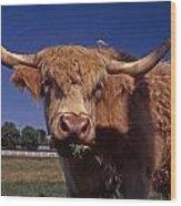 A Lot A Bull Wood Print by Skip Willits