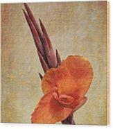 A Loving Gladiolus Wood Print