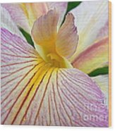 Iris  Metamorphosis Of The Iris Spring Equinox  Wood Print