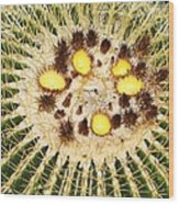 A Mexican Golden Barrel Cactus With Blossoms Wood Print