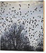 A Million Birds Wood Print