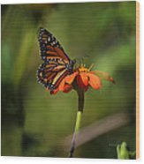 A Monarch Butterfly 2 Wood Print