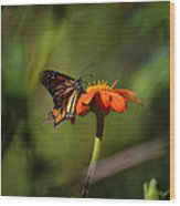 A Monarch Butterfly 3 Wood Print
