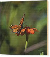 A Monarch Butterfly 4 Wood Print