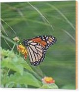 A Monarch Butterfly At Rest Wood Print