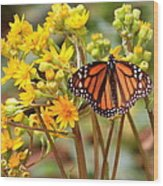 A Monarch Butterfly Wood Print