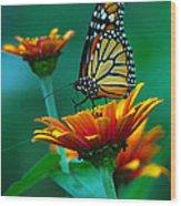 A Monarch II Wood Print