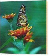A Monarch Wood Print