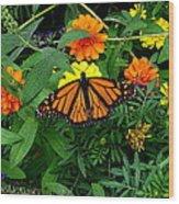A Monarchs Colors Wood Print