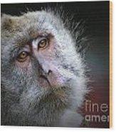 A Monkey's Look Wood Print