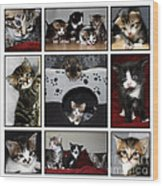 A Montage Of Kittens Wood Print