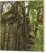 A Moss Covered Tree  In The Ho National Rain Forest Wood Print