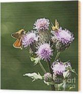 A Moth's Feast Wood Print