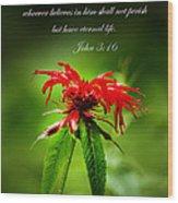 A Mountain Flower  John 3 16 Wood Print