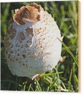 A Mushroom Wood Print