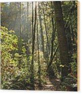 A Narrow Trail Wood Print