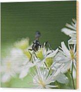 A Nectar Drink For This Black Mud Dauber   Wood Print