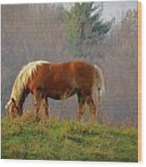 A November Horse Wood Print