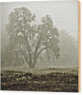 A Old Oak On A Foggy Day  Wood Print