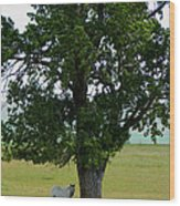 A One Horse Tree And Its Horse Wood Print