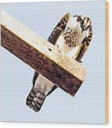 A Osprey Wood Print