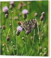 A Painted Lady Wood Print