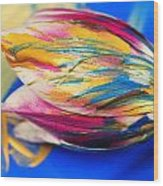A Painted Tulip. Wood Print