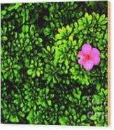 A Painting Azalea On Boxwoods Wood Print