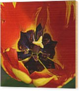 A Painting Red Tulip Wood Print