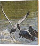 A Pair Of Brown Pelicans Wood Print