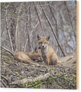A Pair Of Cute Kit Foxes 2 Wood Print