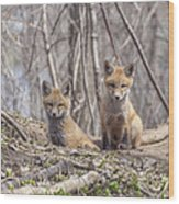 A Pair Of Cute Kit Foxes 3 Wood Print