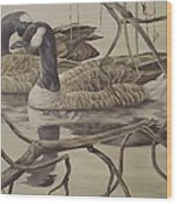 A Pair Of Ducks Wood Print