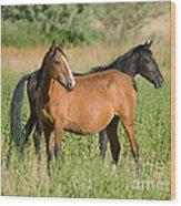 A Pair Of Mustangs Wood Print