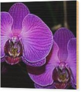 A Pair Of Purple Orchids From Bermuda Wood Print