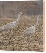 A Pair Of Sandhill Cranes 2014-1 Wood Print