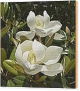 A Pair Of Southern Magnolia Blossoms Wood Print