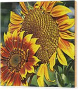 A Pair Of Sunflowers No.1 Wood Print
